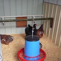 Chicken Coop Feeder