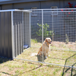 Dog Runs, Enclosures & Cages title=