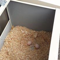 Aviary Layer Box